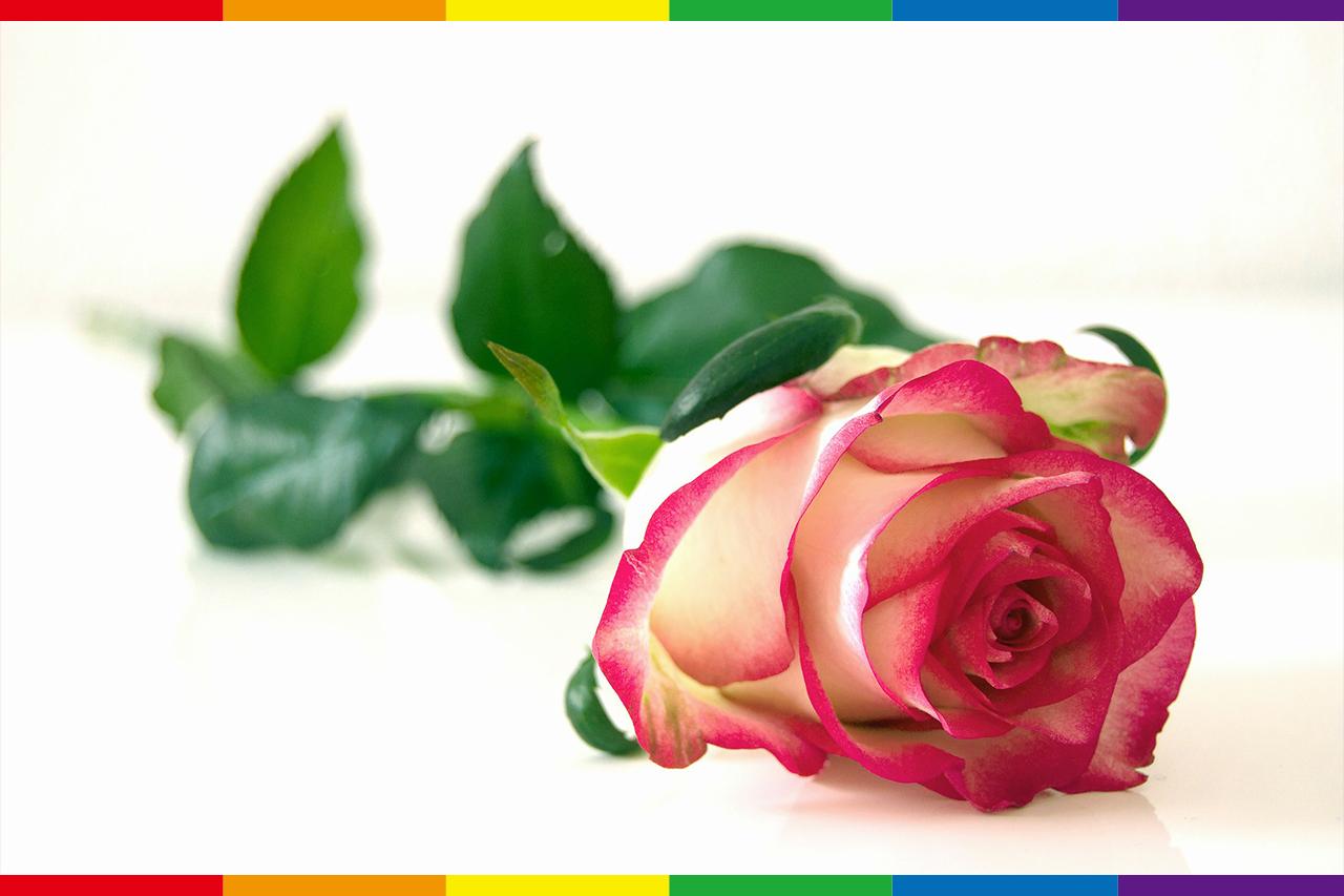 從玫瑰少年葉永鋕看多元性別教育的重要性